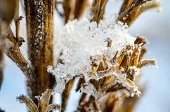 垂悬在冬天植物的冻冰 图库摄影