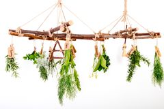 垂悬在分支有空气标志的草本烘干机的新鲜的草本和是 库存图片