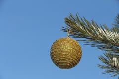 垂悬在分支的球形 免版税库存图片