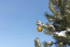 垂悬在分支的球形 库存图片