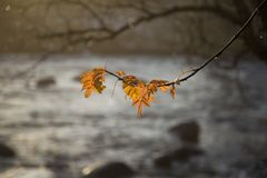 垂悬在分支的美丽,明亮的五颜六色的叶子在秋天 库存图片