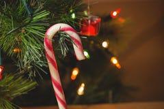 垂悬在圣诞树的棒棒糖特写镜头 图库摄影