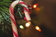 垂悬在圣诞树的棒棒糖特写镜头 免版税库存照片