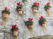 垂悬在墙壁上的红色仙客来罐 免版税库存照片