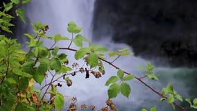 垂悬在大瀑布前面的绿色藤 股票录像