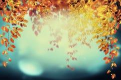 垂悬在天空背景的秋天公园的五颜六色的叶子与bokeh 免版税库存照片