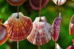 垂悬在庭院里的壳 库存图片