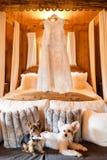 垂悬在挂衣架和两条逗人喜爱的狗的婚礼礼服 免版税库存图片