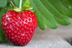 垂悬在摊铺机走道的心形的草莓 免版税库存图片