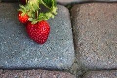 垂悬在摊铺机走道的草莓 库存照片