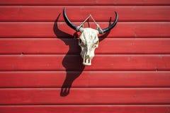 垂悬在有阴影的红色谷仓的公牛头骨 免版税库存照片