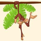 垂悬在木在乐趣动画片样式设计的分支平的明亮的颜色被简化的传染媒介例证的逗人喜爱的猴子黑猩猩 免版税库存照片