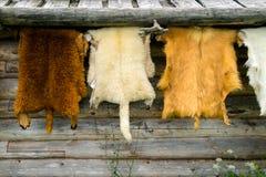 垂悬在木家庭墙壁上的野生动物毛皮外面 免版税库存图片