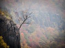 垂悬在木栅峭壁边缘的孤零零树 免版税库存图片