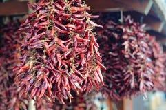 垂悬在束的热的辣传统辣椒辣椒粉待售在匈牙利 免版税库存图片