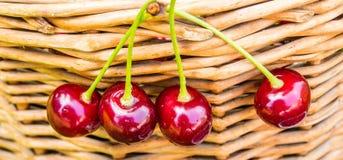 垂悬在柳条筐的四棵饼樱桃 免版税图库摄影