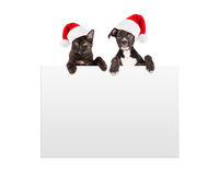 垂悬在标志的圣诞节小狗和小猫 免版税库存图片
