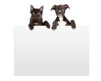 垂悬在标志的小狗和小猫 库存照片