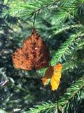 垂悬在树上的一个网的叶子 免版税图库摄影