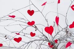 垂悬在树枝的红色心脏 华伦泰的 免版税库存图片