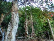 垂悬在树的一把木根摇摆椅子在海岸的海滩附近 库存照片
