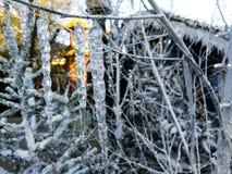 垂悬在树的冻冰 免版税库存图片