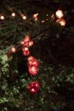 垂悬在树的小的灯笼串  免版税图库摄影