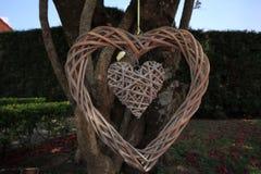 垂悬在树的木心脏 免版税库存照片
