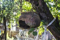 垂悬在树的残破的水罐 库存照片