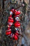 垂悬在树的红色石镯子 图库摄影