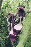 垂悬在树的红色鞋子 免版税库存照片