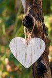垂悬在树的装饰白色心脏在庭院里 爱的声明在华伦泰` s天, 免版税库存图片