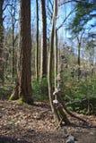 垂悬在森林的石头在弗莱堡,德国附近 免版税图库摄影