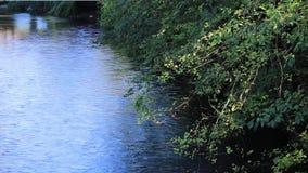 垂悬在流动的水的晚夏树在有阴影的河在水 股票视频
