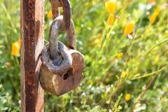 垂悬在生锈的岗位的老生锈的锁特写镜头反对加利福尼亚野花草甸领域,橙色yelow鸦片背景  免版税库存照片
