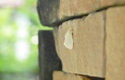 垂悬在砖墙上的长毛的飞蛾 图库摄影