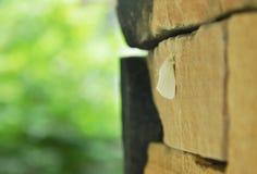 垂悬在砖墙上的长毛的飞蛾 免版税库存照片