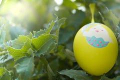 垂悬在绿色叶子树的黄色复活节彩蛋,为传统蛋的猎人准备 免版税库存图片