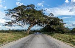 垂悬在路的树。 库存照片