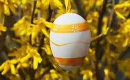 垂悬在连翘属植物灌木的五颜六色的复活节彩蛋在庭院里 免版税库存照片