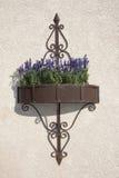 垂悬在金属花箱子的墙壁上的紫色花 免版税图库摄影