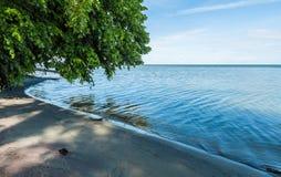 垂悬在镇静海湾水的绿色树 免版税库存图片