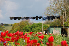 垂悬在领域的洗衣店 免版税库存照片