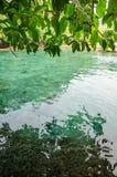 垂悬在鲜绿色热带水的叶子分支在Emeral 免版税图库摄影