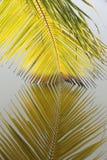 垂悬在水中的棕榈叶细节  库存图片