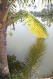垂悬在水中的棕榈叶 免版税库存图片