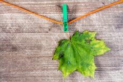 垂悬在绳索的生锈的枫叶 库存图片