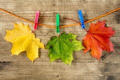 垂悬在绳索的秋叶 库存照片