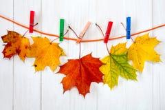 垂悬在绳索的秋季槭树叶子 库存图片