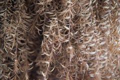 垂悬的干燥叶子墙纸02 库存照片